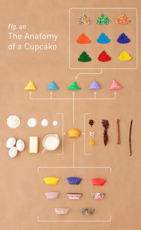 cupcakeanatomy_v03.jpg