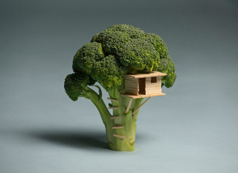 broccoli_20house.jpeg