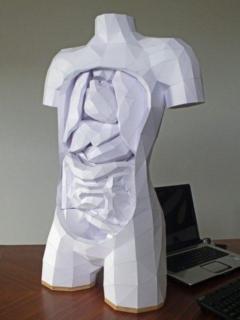 papertorsowithremovableorgans.jpeg