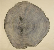 How Bryan Nash Gill Makes His Amazing Prints from Cross-Sections of Fallen Trees