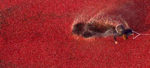 cranberry-4_large.jpg