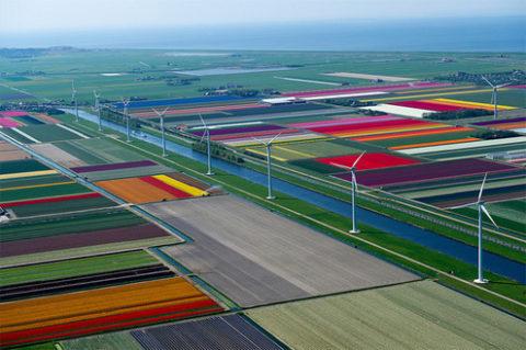 tulips-8_large.jpg