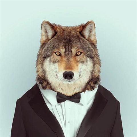 Fashion-Zoo-Animals-1_large.jpeg