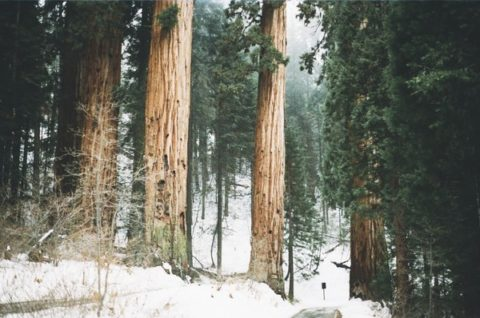 forest-snow-trees-2800-829x550_large.jpg