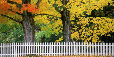 1441918907-landscape-1441754621-fall-picket-fence_large.jpg