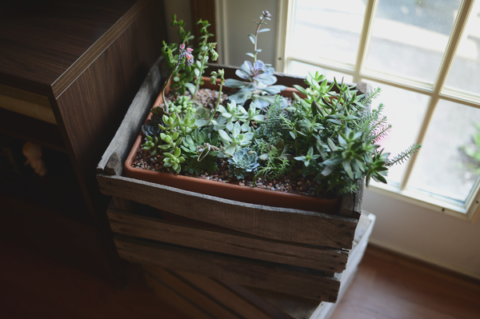 Created Succulents via [http://blytheponytailparadestypepadcom/my-blog/2013/07/crated-succulentshtml]