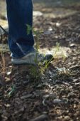 A DIY Weed Killer That Actually Works