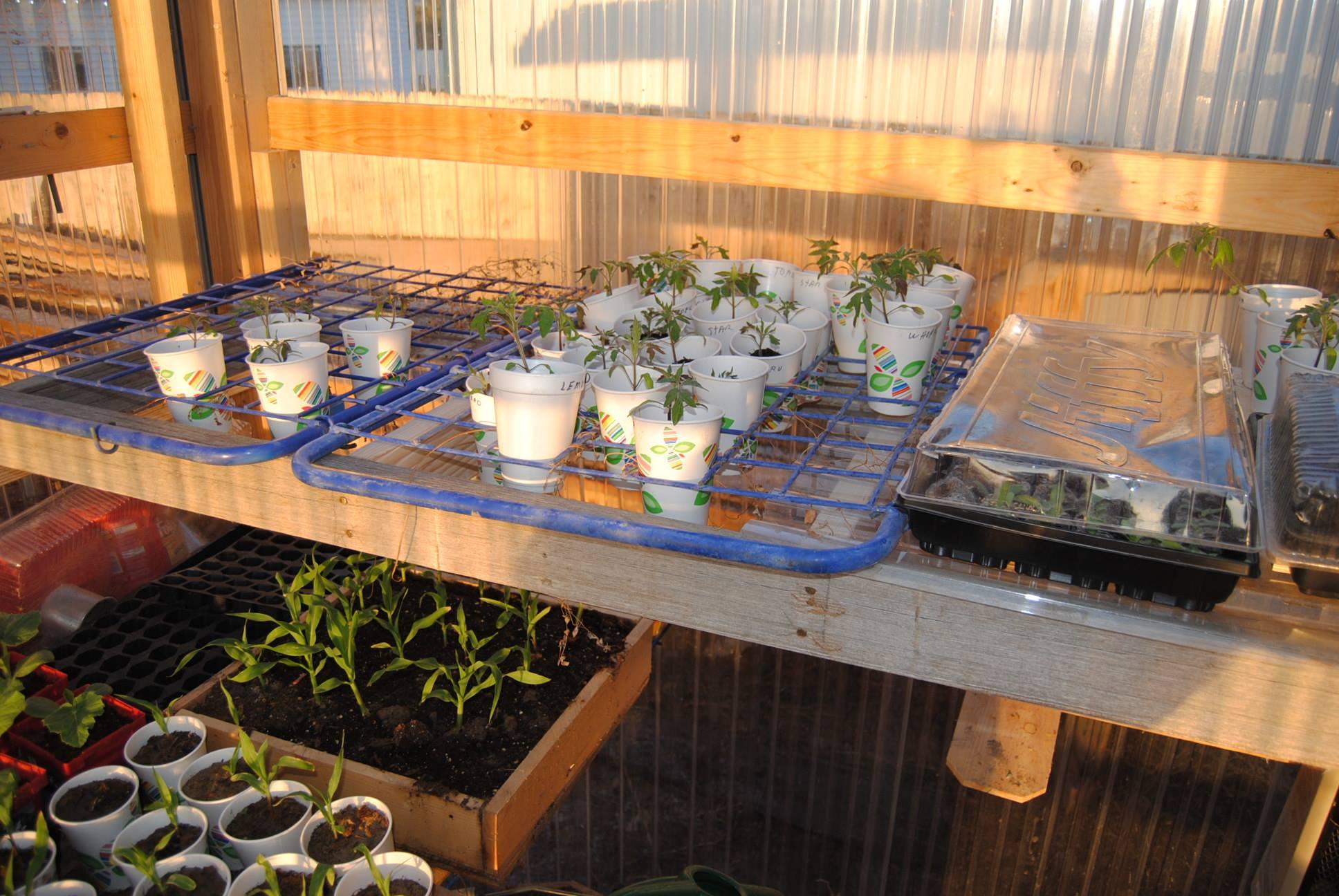 greenhouse green plants gardening