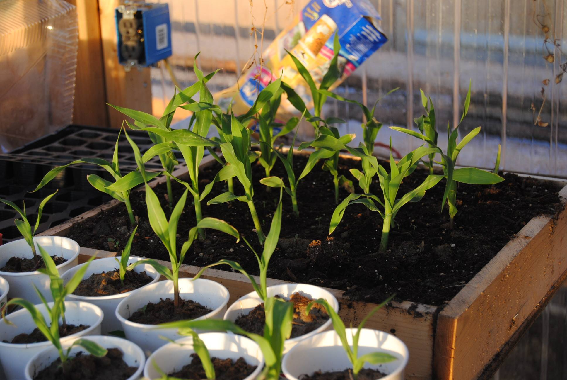 Easy Guide To Growing Your Own Food: Starting Plants Indoors