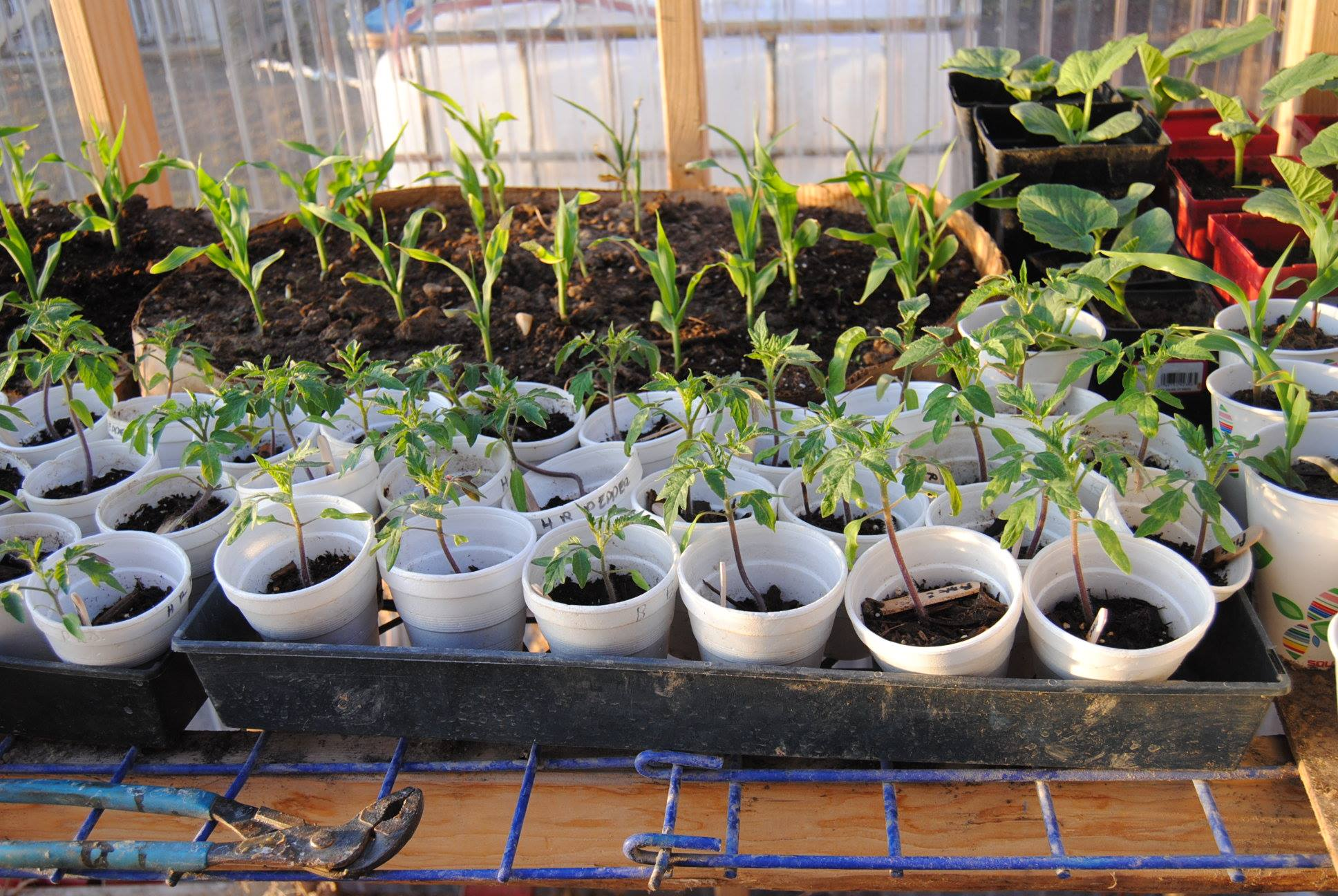 greenhouse gardening plants seedligns