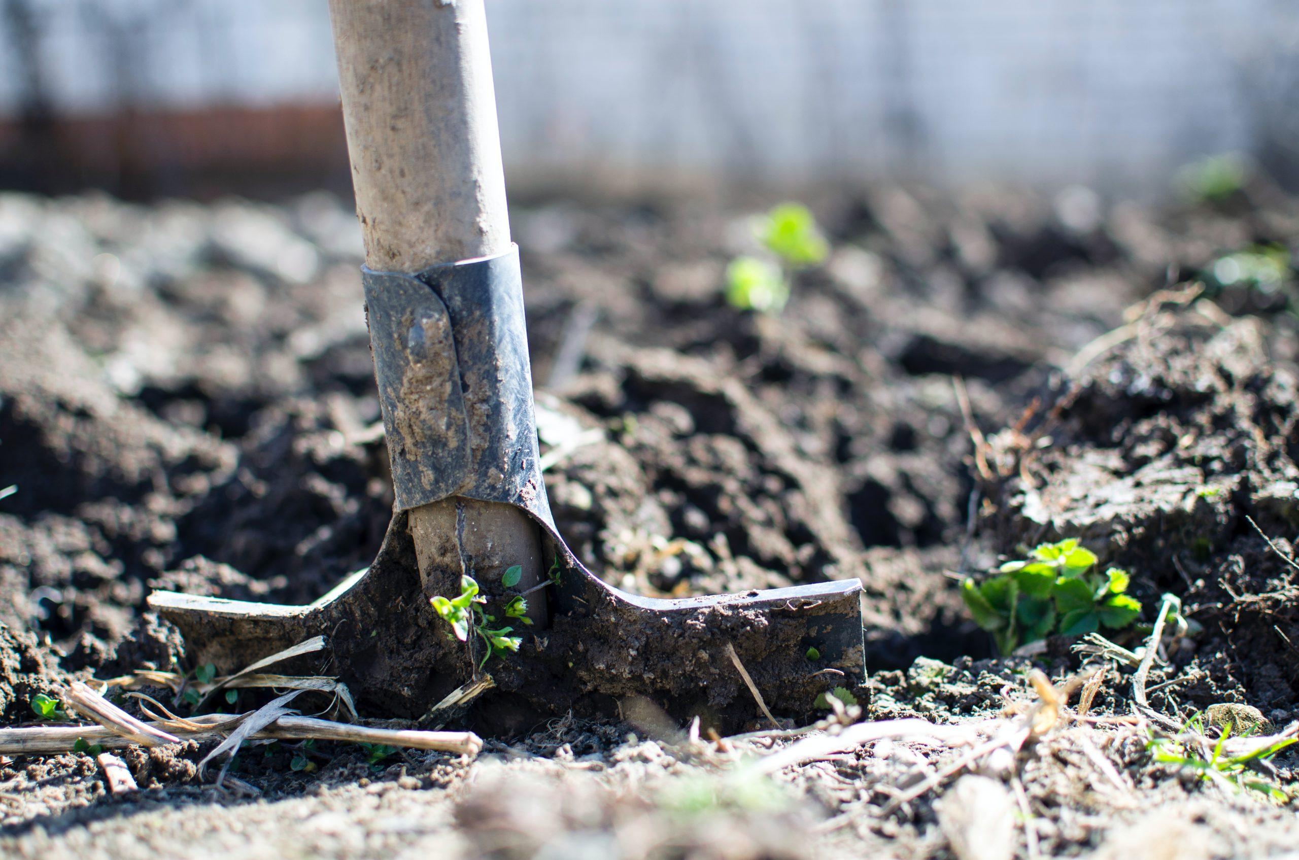 shovel breaking ground in garden