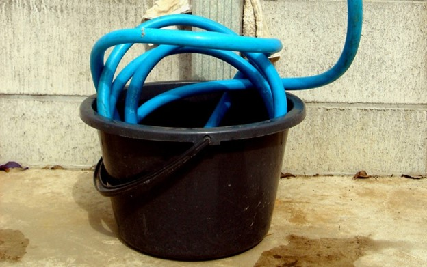 coiled host in a water bucket