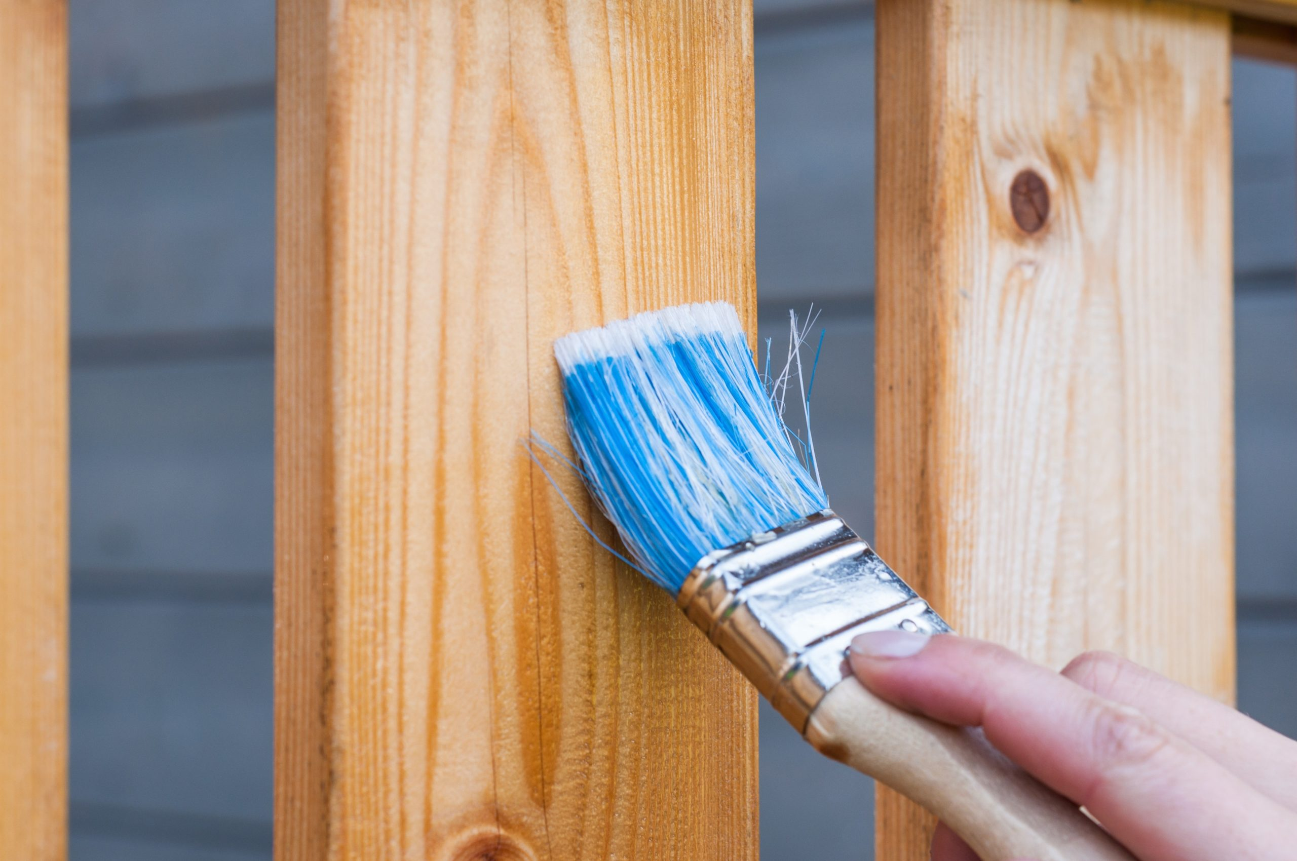 painting varnish on a fence board with a blue bristled paint bruch