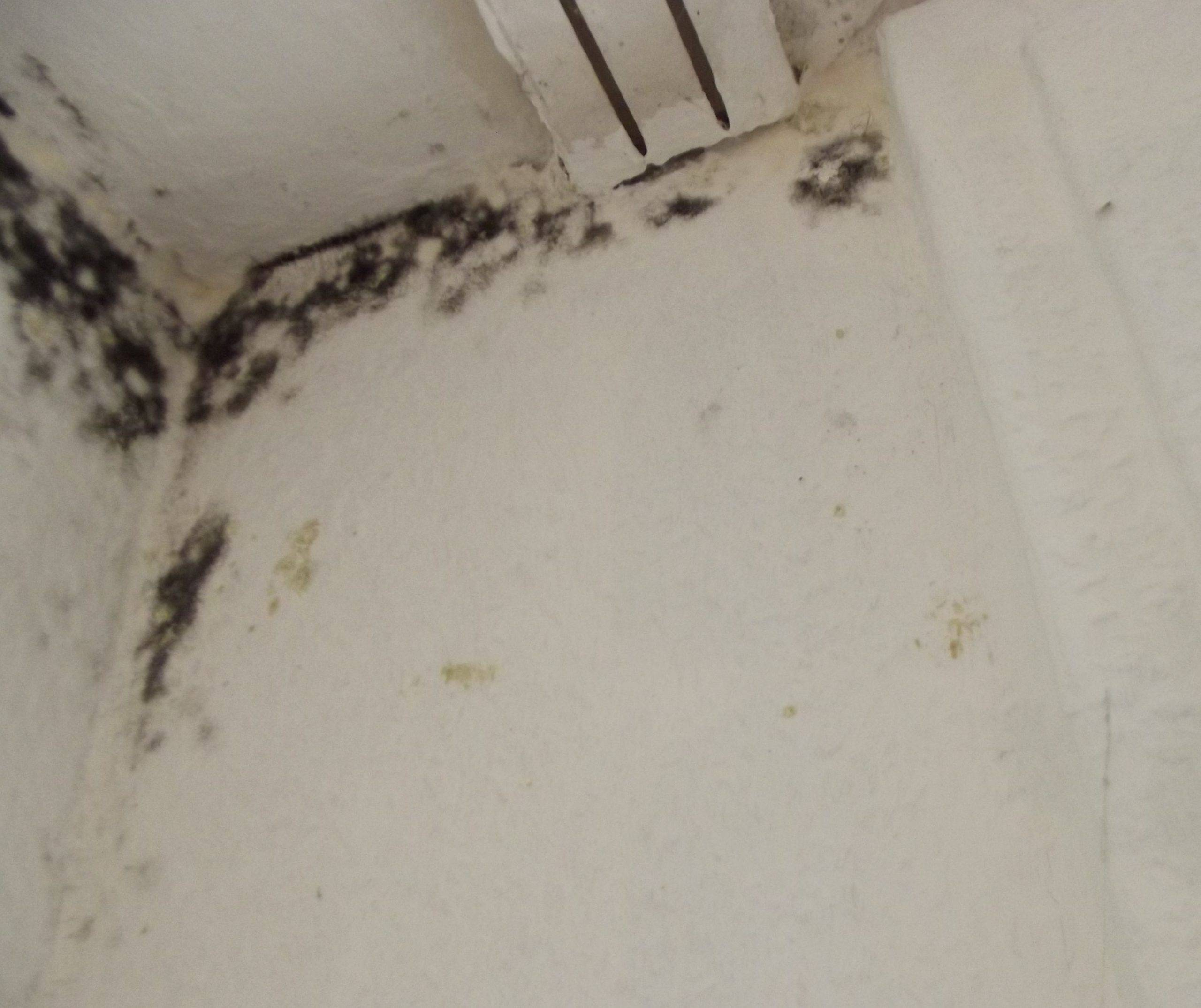 mold Chaetomium abatement