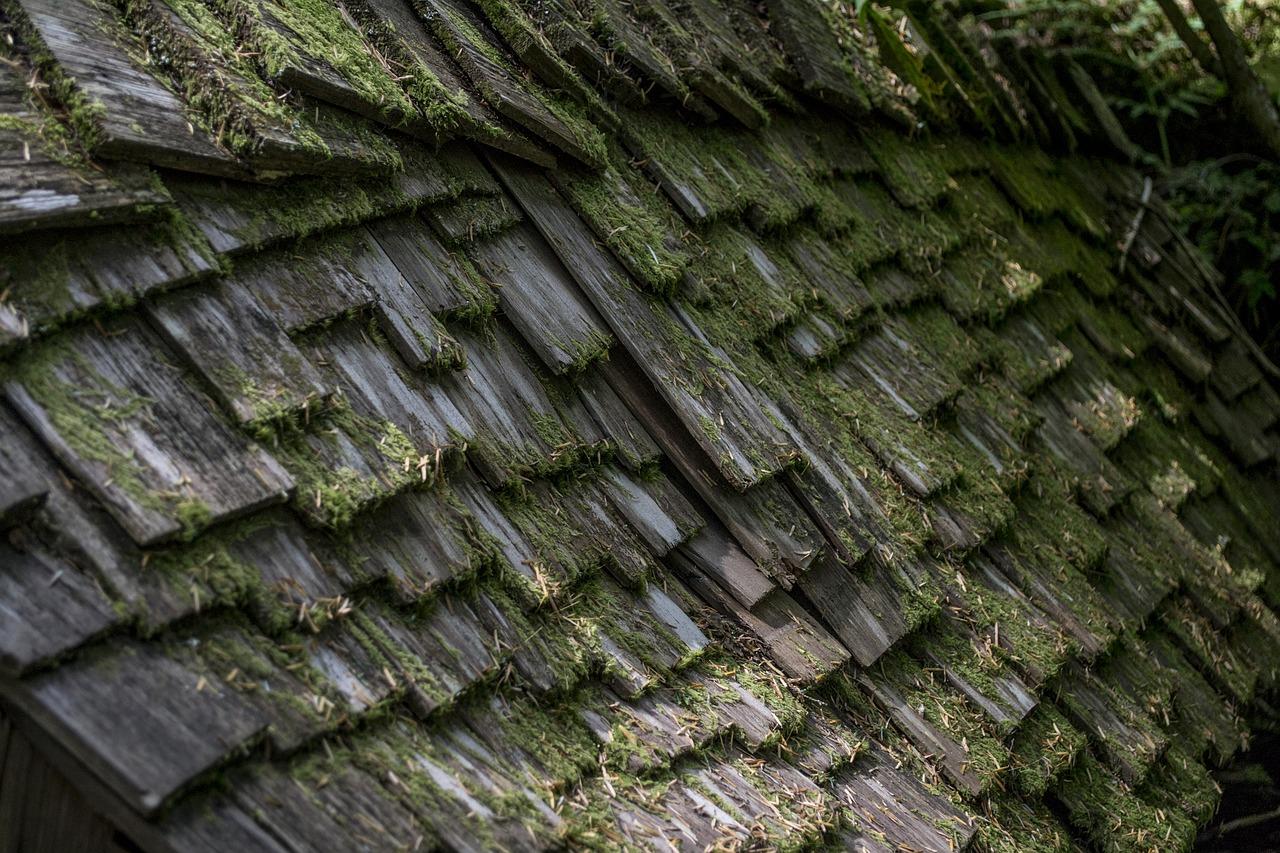 Tiles covered in algae