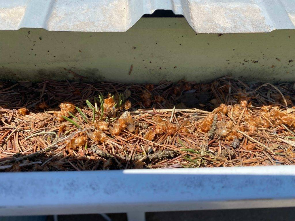 Dirty Gutter To Be Cleaned