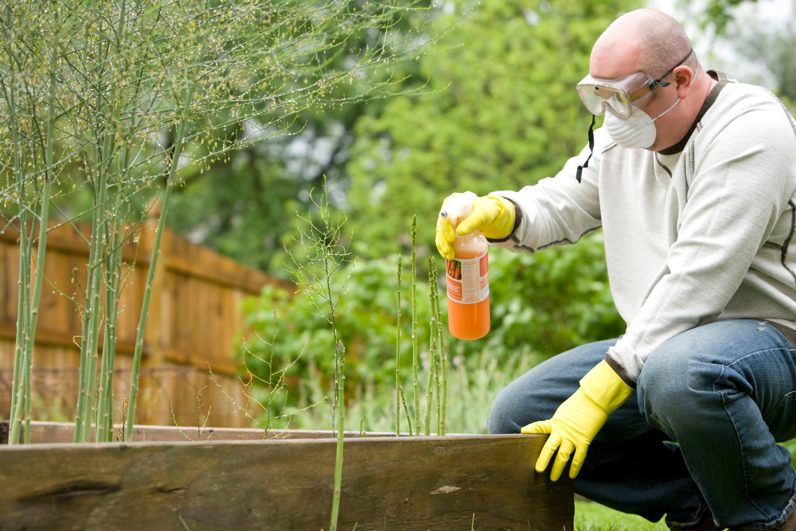 Man in mask and googles spraying plants