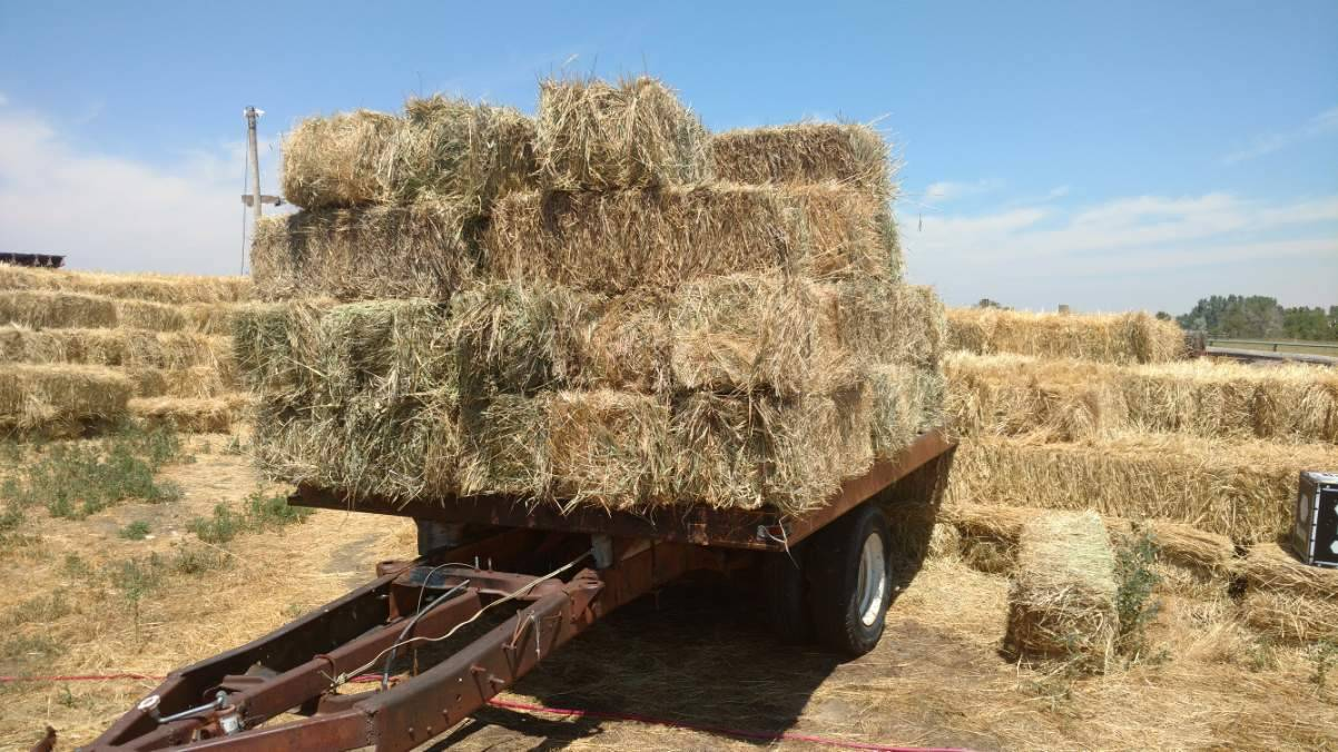 trailer backup