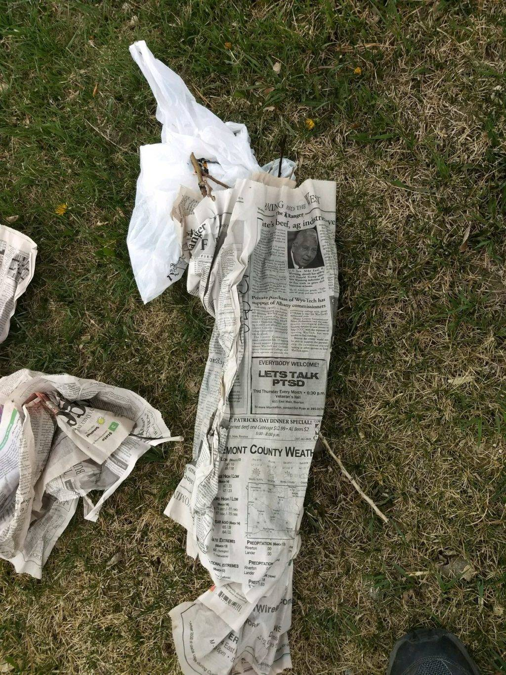 cuttings wrapped in moist newspaper to graft
