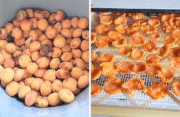 How To Dehydrate Apricots For The Perfect Summer Snack
