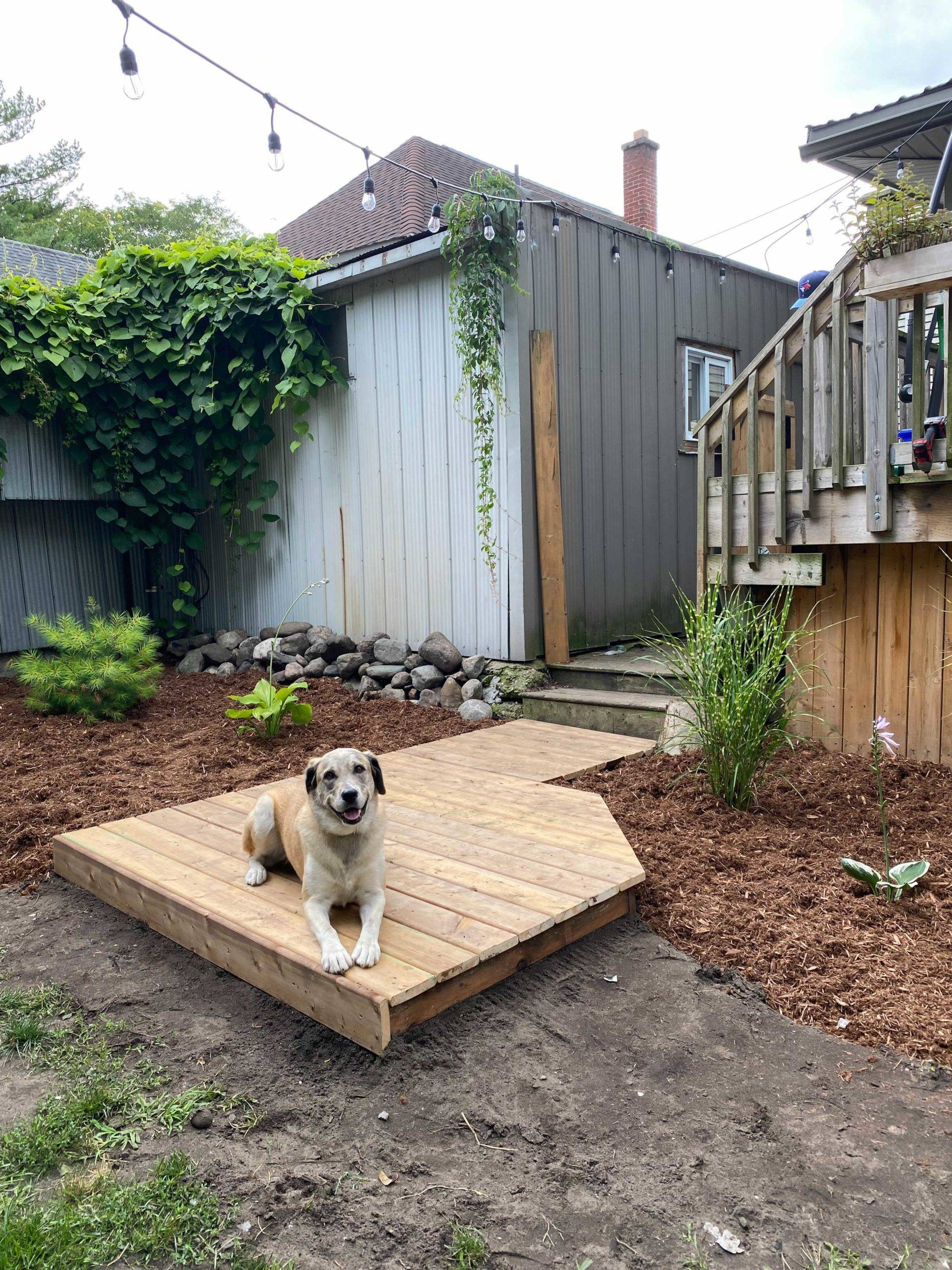 dog sitting on boardwalk in backyard