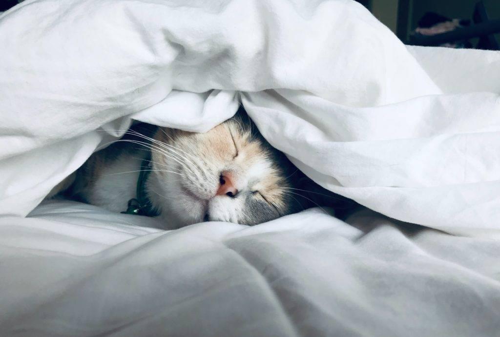 Katze schläft zwischen Laken und Decke